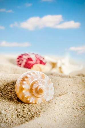 Few shells on the golden beach. Blue sky with cloud in background