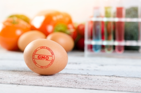 modified: Close up of egg with GMO modified stamp. Genetically modified food conception Stock Photo