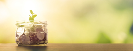 Jar with coins. Plant sprout grows in the jar. Budget, saving money concept with copy space for web banner Zdjęcie Seryjne