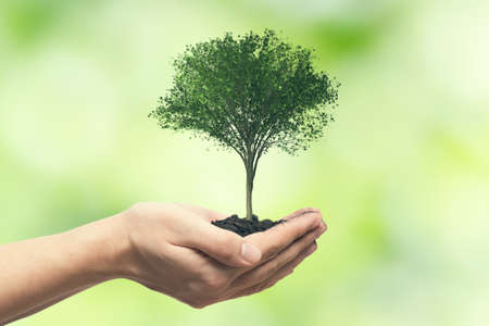 Human hand holding tree against blurred natural background. Save nature, ecology, Earth day concept.