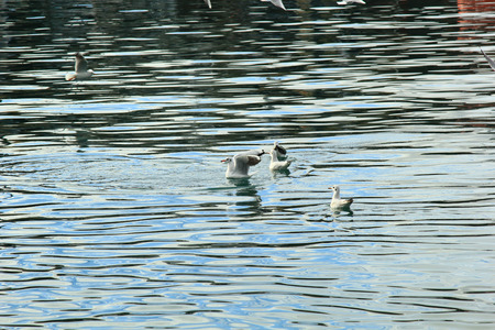 seagulls on the surface of a lake.