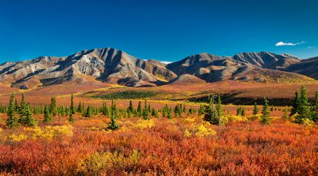 Autumnal Denali Nt Park Scenery with mountain range