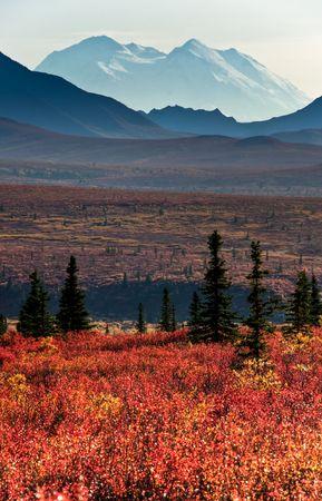 mckinley: Impressive Mt McKinley behind moutain range and red autumnal tundra vegetation