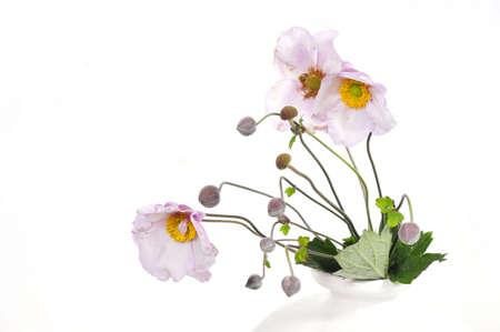 pink anemone Flower Stock Photo - 10642217
