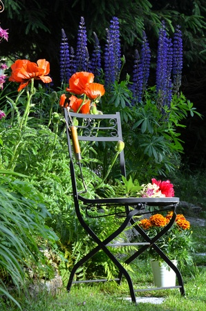 Garden chair colorful flower bed photo