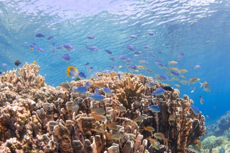 many fishes at beautiful hard coral photo