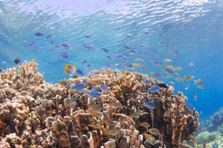 many fishes at beautiful hard coral Standard-Bild
