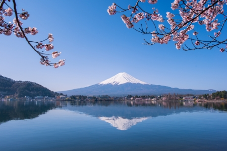 Mount Fuji and Cherry Tree photo