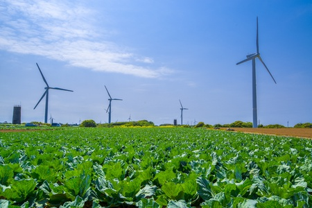 Wind-power field photo