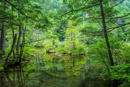 the silence of the world: Green pond