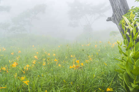 hemispherical: misty hemispherical Stock Photo