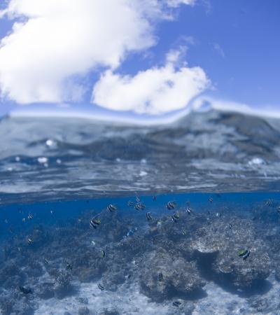 platax: half water