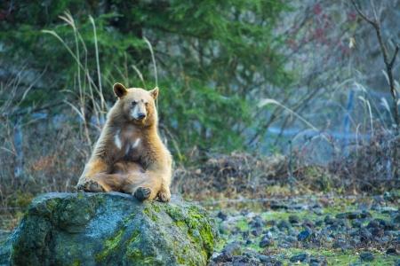 bear Standard-Bild