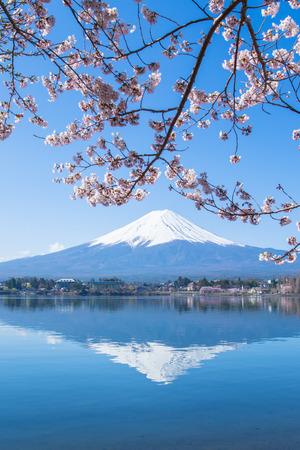 cerezos en flor: Monte Fuji