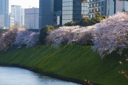 Spring in city