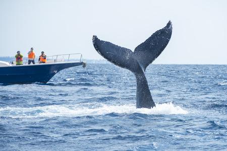 クジラの尾 写真素材