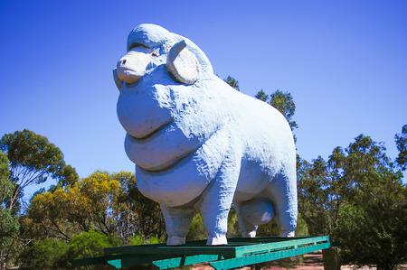 Town image sheep,