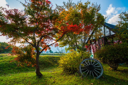 Autumn leaves and water wheel