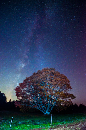 Milky way and Maple photo