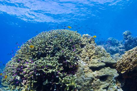 Corals Reef photo