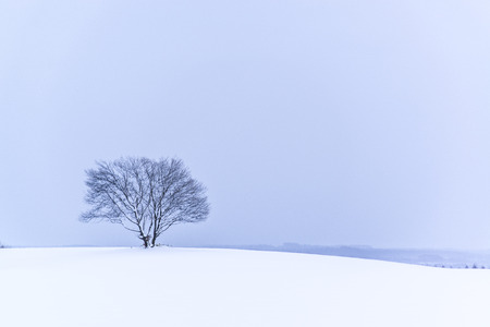 biei: snowy scene Stock Photo