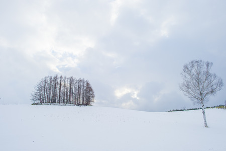 biei: snowscape