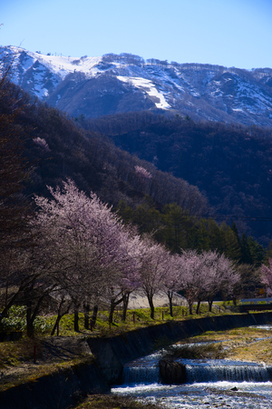 Japanese Spring Scenery