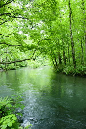 upstream: Oirase gorge in fresh green, Aomori, Japan Stock Photo