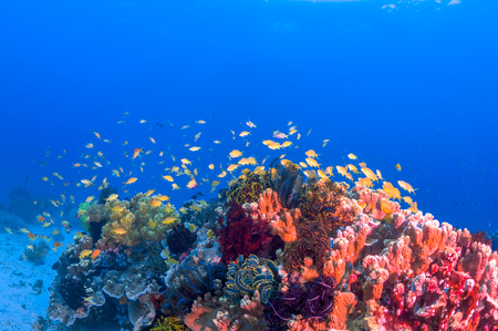 school fish: School of colorful fish on coral reef in ocean Stock Photo
