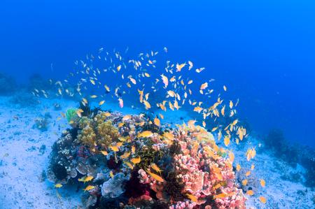 海でサンゴ礁のカラフルな魚の群れ 写真素材