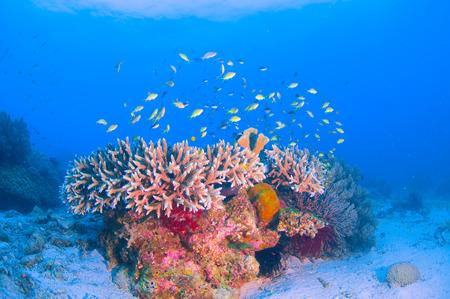 School of colorful fish on coral reef in ocean Standard-Bild