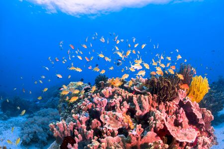 School of colorful fish on coral reef in ocean Stock Photo