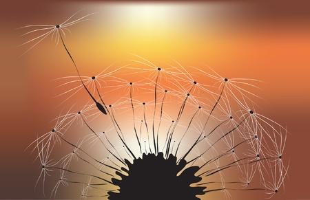 fluff: el diente de le�n puesta de sol del amanecer Vectores