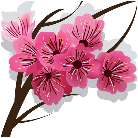 illustrated: Branch of blooming cherry tree Sakura.
