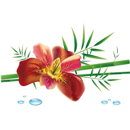 fleur d'iris et de bambou