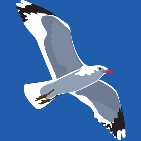 Single seagull flying against background of blue sky.  Vector
