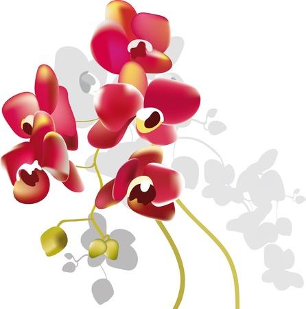 orquídea roja flores Ilustración de vector