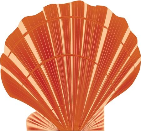 almeja: concha de mar Vectores
