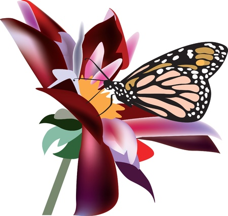 Butterfly on a flower  Stock Vector - 11784826