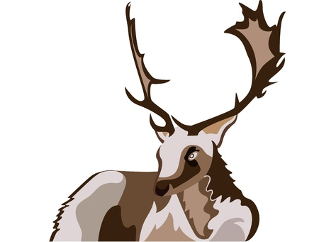 Deer illustration  Stock Vector - 11784908