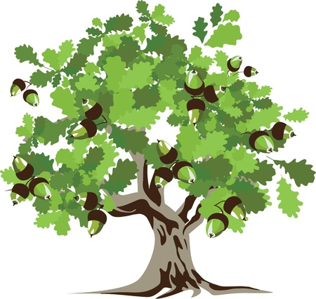 Big green oak tree illustration  Vector