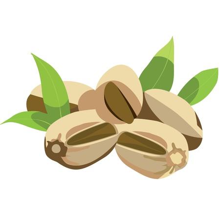 pistachio: pistachio nuts with leaves