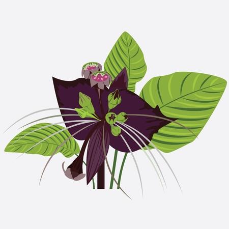 black flower of devil with leaves Stock Vector - 11869109