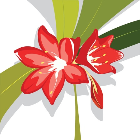 lily vector: Flower red  Lily vector illustration