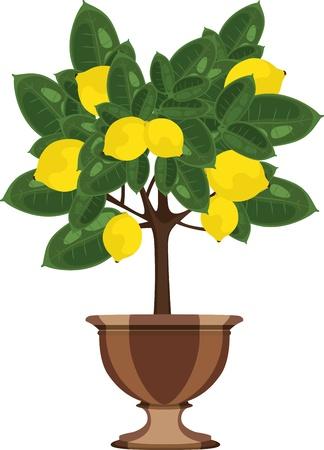 citrus tree: �rbol de lim�n en una ilustraci�n vectorial maceta