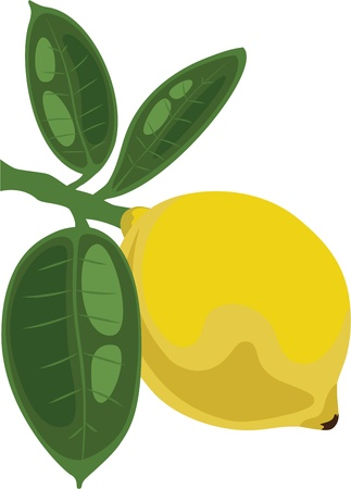 citrus tree: Lim�n en una rama con hojas, ilustraci�n