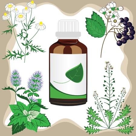plantas medicinales: hierbas medicinales con la ilustración de la botella