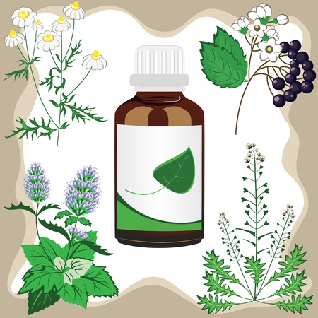 camomile tea: medicinal herbs  with bottle illustration