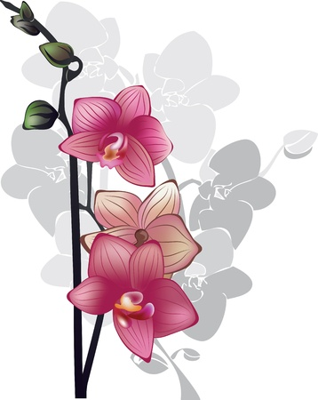 vertical composition: branch of pink orchids illustration