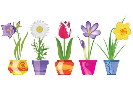Flores de primavera en macetas, aisladas sobre fondo blanco, ilustración vectorial